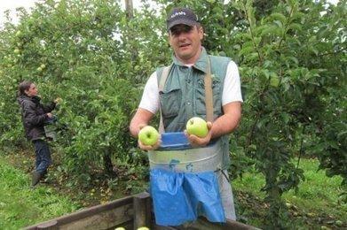 La cueillette de la pomme bat son plein | Agriculture en Dordogne | Scoop.it