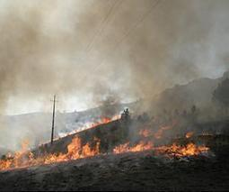 Wildfires can burn hot without ruining soil | Sustain Our Earth | Scoop.it