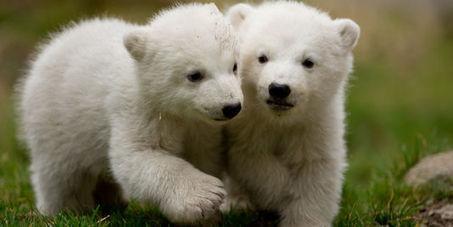 Une trentaine de nouvelles espèces protégées par la convention de Bonn - le Monde | Actualités écologie | Scoop.it