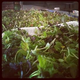 Vegetable Uprising | Économie circulaire locale et résiliente pour nourrir la ville | Scoop.it