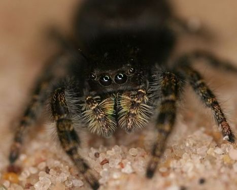 Researchers use 3D printing technology to study spiders | Peer2Politics | Scoop.it