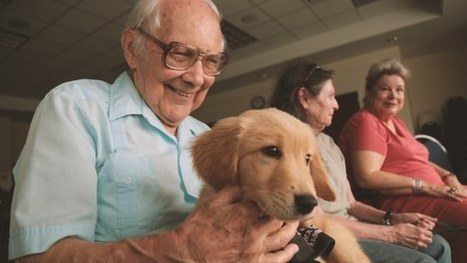 The Power of Puppies for Mental Health | Veterans | Scoop.it
