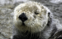 Life on the Bay Web Cam | Monterey Bay Aquarium | Webcams of nature | Scoop.it