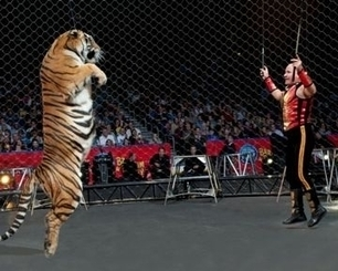 The Worcester City Council and Ringling Bros. Circus - InCity Times | Animals R Us | Scoop.it