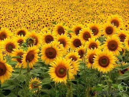 10 especies comestibles para tu jardín - PLOG | verdeden | Scoop.it