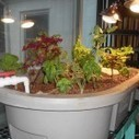 Aquaponics at Greenacres | Greenacres Foundation | Aquaponics in Action | Scoop.it