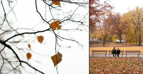 Tell A Compelling Story Through Diptychs For Our Photo Challenge | Linguagem Virtual | Scoop.it