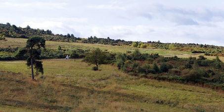 Les forêts britanniques menacées par un champignon dévastateur | Ca m'interpelle... | Scoop.it