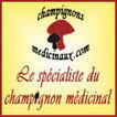 Liste des champignons comestibles et cultivables | Shabba's Yard | Scoop.it