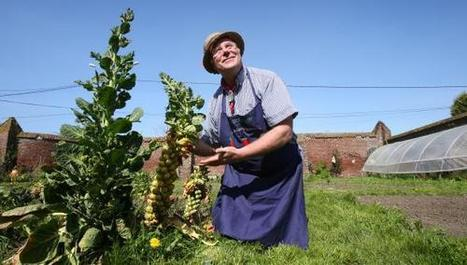 Pas de pesticides dans mon jardin | Jardin Potager Biologique | Scoop.it