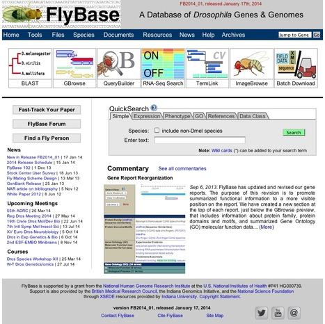 FlyBase - a database for drosophila genetics and molecular biology | bioinformatics-databases | Scoop.it