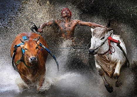 2013 World Press Photo Awards | A Picture Is Worth A Thousand Words (or more) | Scoop.it