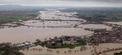 Alluvioni: la soluzione è piantare più alberi   www.salviamoilpaesaggio.it   Architecture & Gardens   Scoop.it