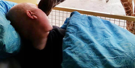 PHOTO: Giraffe Shares Touching Goodbye With Dying Zoo Worker   This Gives Me Hope   Scoop.it