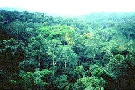 Rainforest Biomes | Rainforests - Global environments | Scoop.it