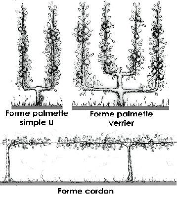 Planter et cultiver les arbres fruitiers formés (Fiches conseils) | Potager & Jardin | Scoop.it