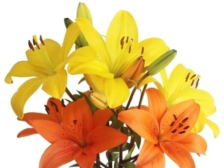 Buy Supreme Flowers Online | Lili Flowers | Scoop.it