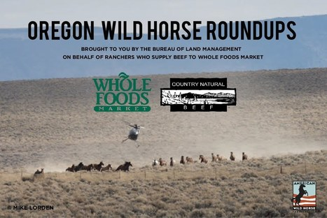 BLM Illegally Sells Protected Wild Horses for Slaughter | GarryRogers NatCon News | Scoop.it