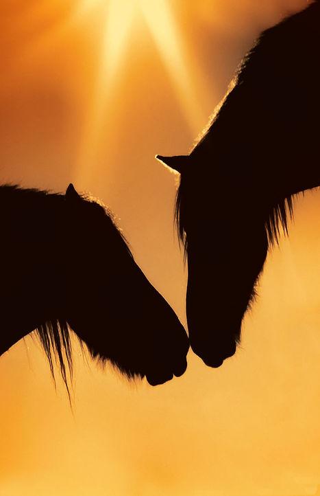 The horses of the sun by Chiara Andolfato | My Photo | Scoop.it