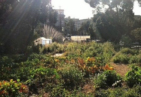 Urban Farming vs. Urban Nature Discussion | SF | Welcome to the Urban Wild | Scoop.it