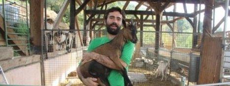 Micromecenazgo para comprar un rebaño de cabras   apontoque   Scoop.it