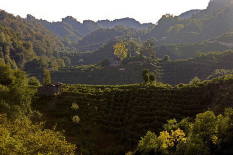 Prosecco producers in Italy go after the Chinese thirst for sparkling wine | @FoodMeditations Time | Scoop.it