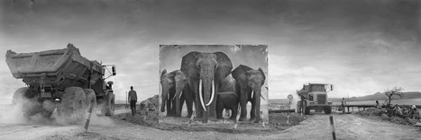 Nouvelle série de Nick Brandt : Inherit the Dust - L'Œil de la photographie   Carnets d'images   Scoop.it