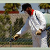 Pest Control Services In Noida NCR