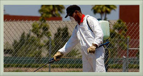 Commercial, Residential Pest Control Delhi | Noida | Gurgaon | Ghaziabad | Faridabad | Pest Control Services In Noida NCR | Scoop.it
