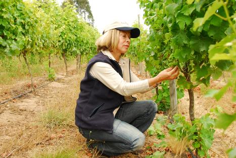 Women to Watch in Chilean Wine | South American Wines Online | Scoop.it