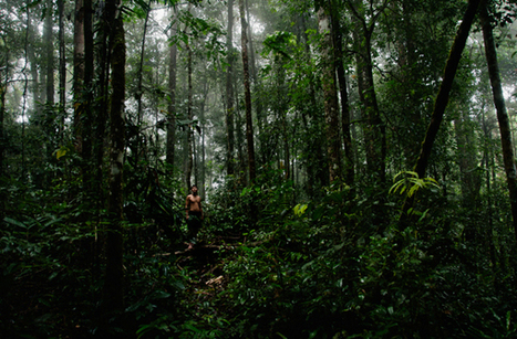The Penan Peace Park: A Bornean Tribe's Last Stand Against Corporate Greed Lust For Palm Oil | Geography general | Scoop.it