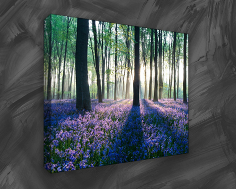 Wildlife Canvas Prints - Be Calm, Be Free with Nature | Canvas art | Scoop.it