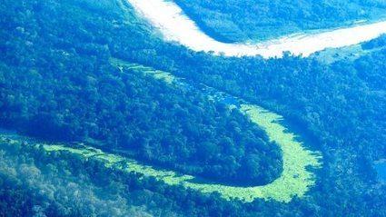 La ruta hacia la COP21: diez temas claves para los bosques y el sector de uso del suelo | Agua | Scoop.it