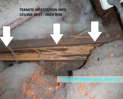 Home Termite Control: Your one Stop termite solution in Sydney | Home Termite Control | Scoop.it