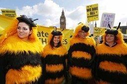 Pesticides tueurs : la victoire des abeilles | Toxique, soyons vigilant ! | Scoop.it