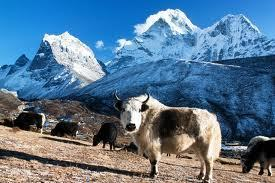 Sagarmatha National Park | Tourism In Nepal | Scoop.it