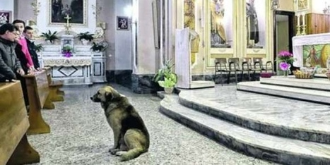 Perro que espera en la Iglesia a su dueña fallecida - Tendencias - ADN | Loyalty in animals | Scoop.it