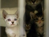 Bremerton couple must surrender 70 cats housed in trailer - Kitsap Sun   The Funniest Cats In The World!   Scoop.it