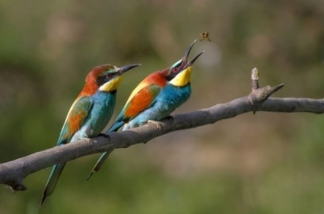 The week in wildlife - in pictures | Sustainable Futures | Scoop.it