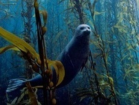 La fotografia celebra le meraviglie del mondo marino: l'Italia sul podio - Diregiovani | Immersioni sub in Italia | Scoop.it