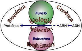 (ES) - Índice de Acrónimos y Siglas comunes en Bioquímica y Biología molecular | Enrique Castro & C. Manuel Ruiz de Galarreta Hernández | Agua | Scoop.it