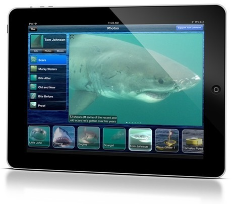 How You Can Track Great White Sharks on Your Phone   Indigo Scuba   Scoop.it