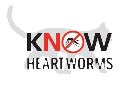 6 Misconceptions About Heartworm Disease In Cats | BestVetCare | Pet Care | Scoop.it