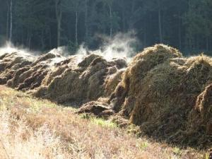 Does converting cow manure to electricity pay off? Successful renewable energy project in Vermont   Food issues   Scoop.it