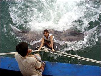 Une raie Manta géante de 1,5 tonnes attrapée par un pêcheur chinois | Rays' world - Le monde des raies | Scoop.it