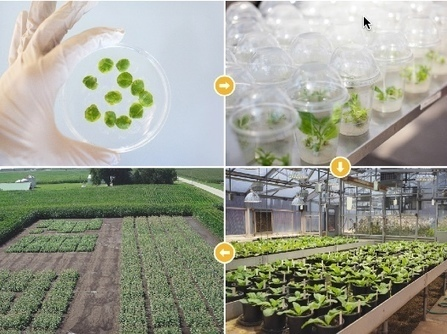 Photosynthesis hack needed to feed the world by 2050 | KurzweilAI | Knowmads, Infocology of the future | Scoop.it