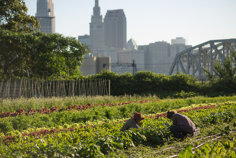 Laying Roots in Foreign Soil: Refugees Thrive in Urban Agriculture Roles | Food issues | Scoop.it