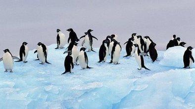 Deal on huge #Antarctic #MarineReserves #blocked ! Unique #ecosystem needs protecting Now! Update below.. | Rescue our Ocean's & it's species from Man's Pollution! | Scoop.it