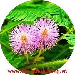 Phấn hoa có giá trị dinh dưỡng rất cao cho chúng ta. | Mon dac san | Scoop.it