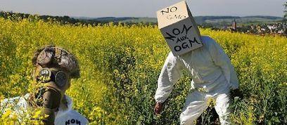 L'UE autorise la commercialisation de 19 OGM, dont 11 de Monsanto | Site mobile Le Point | Ecologie - Humanisme - Solidarités | Scoop.it
